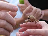 Chameleon lunch 1