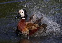 Duck Landing 4