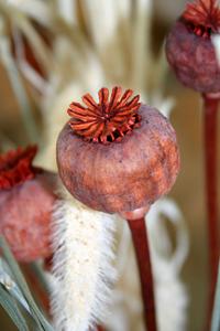 poppy-head
