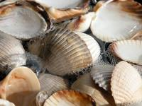 More shells 1