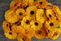 Organic marigold 3