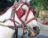 Karetela Horse