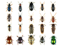 insect_world_ 2
