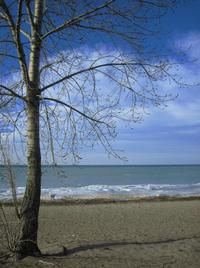 buds on the beach