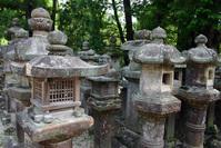 Japanese Lanterns 3