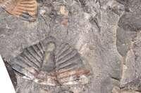 trilobite tobermory ontario canada 7426.JP