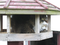 cat in a birdhouse