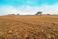 Tuscany plowed Field