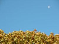 moon&leaves