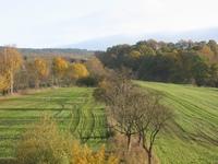 autumn morning 1