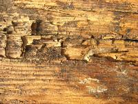 rotten wood 7