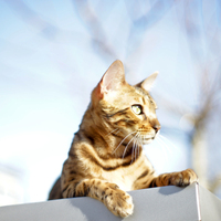 Cat lying in Sun on Roof