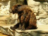 bear! 1