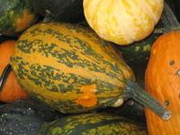 Gourds gourds gourds! 5