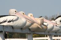 Long beaks 2