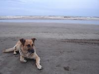 cassius street dog