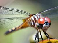 Stunning Dragonfly
