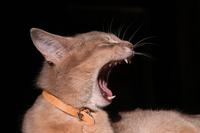 Cat story 13
