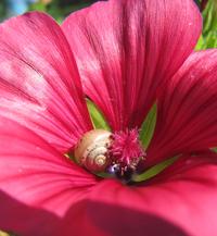 snail in flower