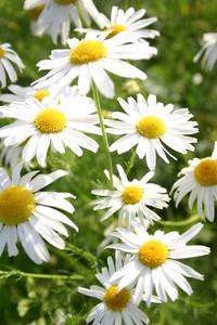 wild flowers 18