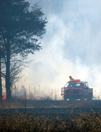 Preventing Forest Fires 3