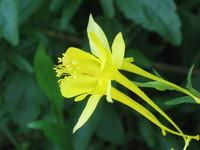 Botanic Garden Flower