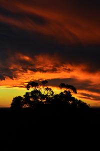Australian Silhouette