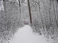 winter idyll 2