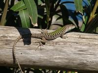 small reptile 2