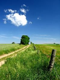 lonley_road_tree 2