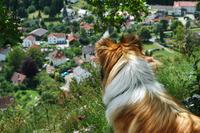 Facing The Village