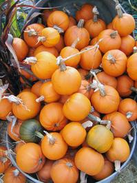 Pumpkins in a Pail