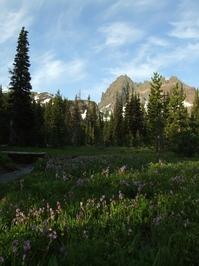 Alpine Meadow in Oregon