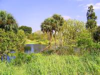 Palm Swamp 1