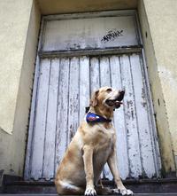 dog style 1