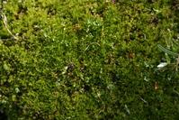 Moss in Macro 3