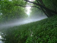 River steam