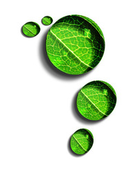 leaf/dewdrop 2