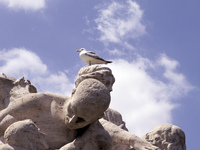 Gull on the statue