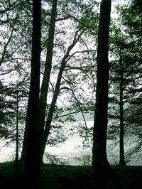 On the Lake 1B 3