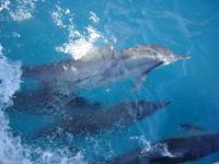 golfinhos de noronha