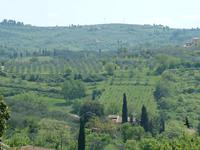 Tuscany hill near Florence 4