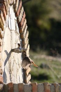 Zahara de la Sierra, Spain 4