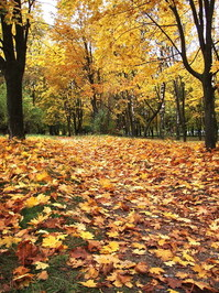 autumn in park 2