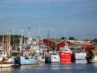 Gilleleje Harbour 4