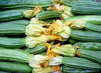 italian zucchine