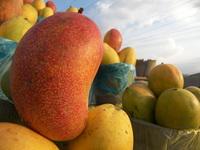 Mangos 2