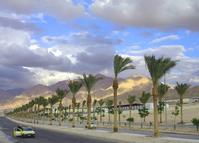 street of palms