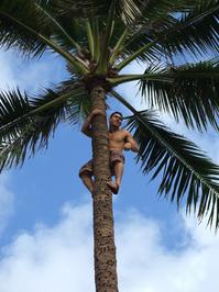 tree climper