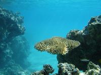 Underwater at Aitutaki